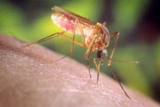 تعرف على أعراض فيروس غرب النيل