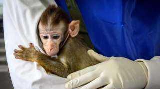 تسجيل أول حالة وفاة بـ«الفيروس القردي» في العالم