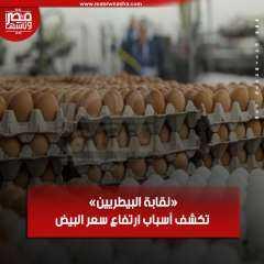 «نقابة البيطريين» تكشف أسباب ارتفاع سعر البيض