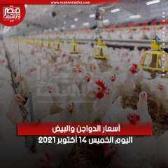 مصر وناسها  أسعار الدواجن والبيض اليوم الخميس 14 أكتوبر 2021